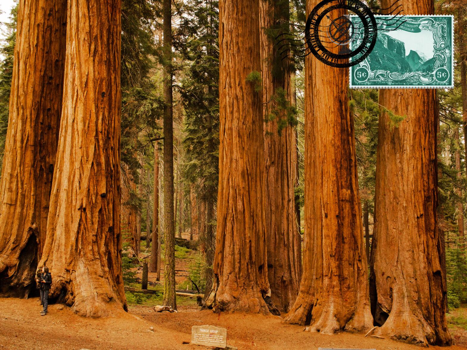 Visitar os Parques Nacionais da Califórnia
