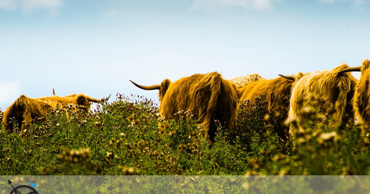 Algures pela Escócia - A Rota da Viagem