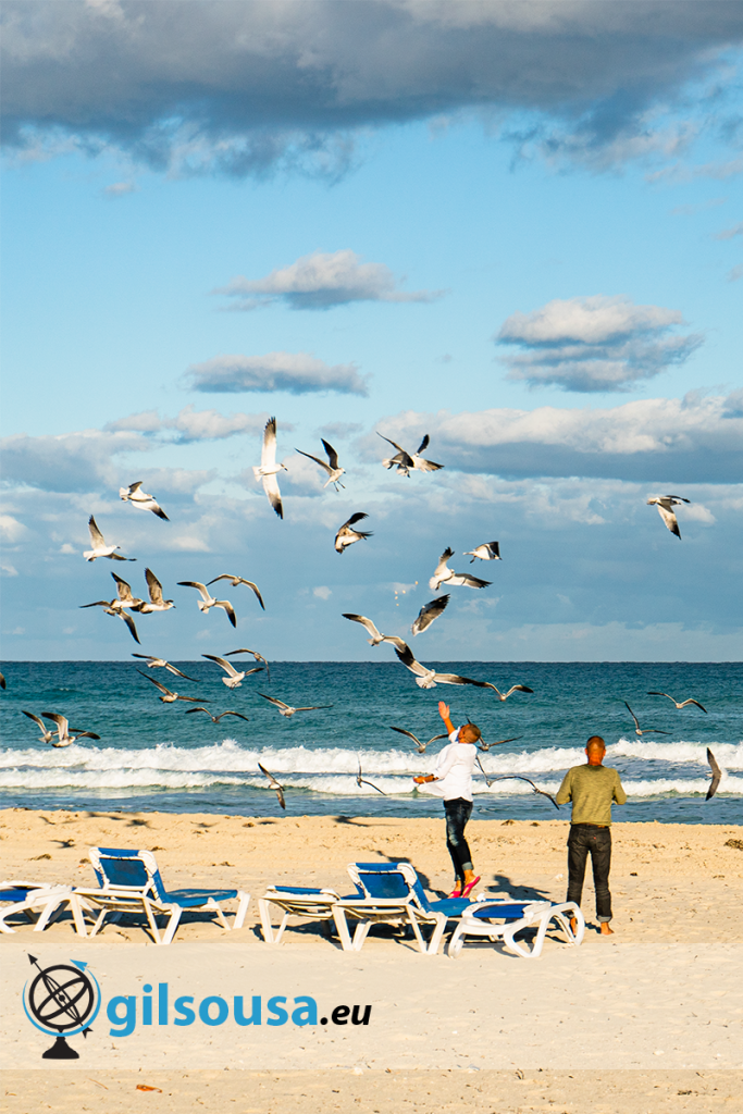 Casal a alimentar gaivotas em Varadero