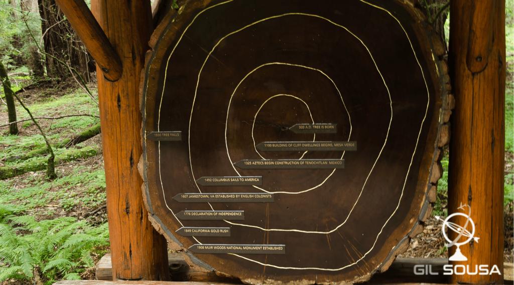 Datas marcadas nos aneis de uma sequóia em Muir Woods