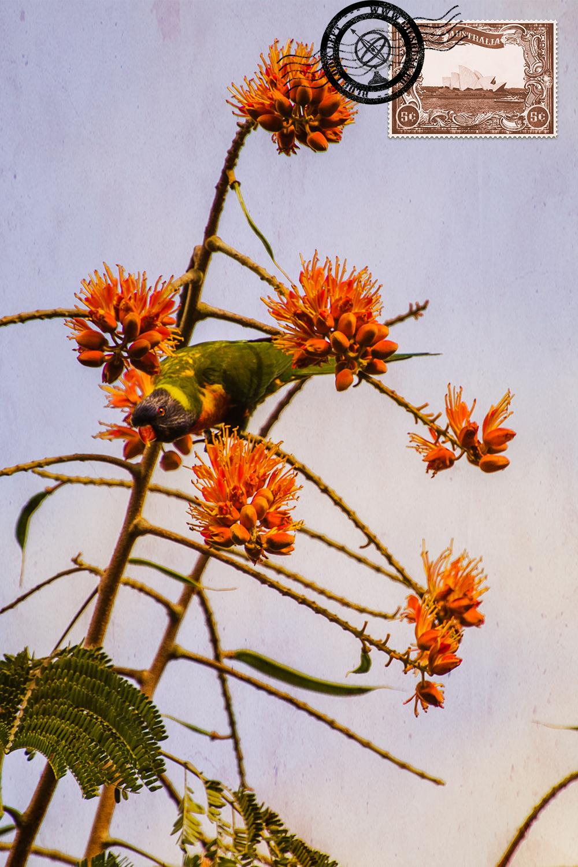 Lorikeet nos Jardins Botânicos de Brisbane