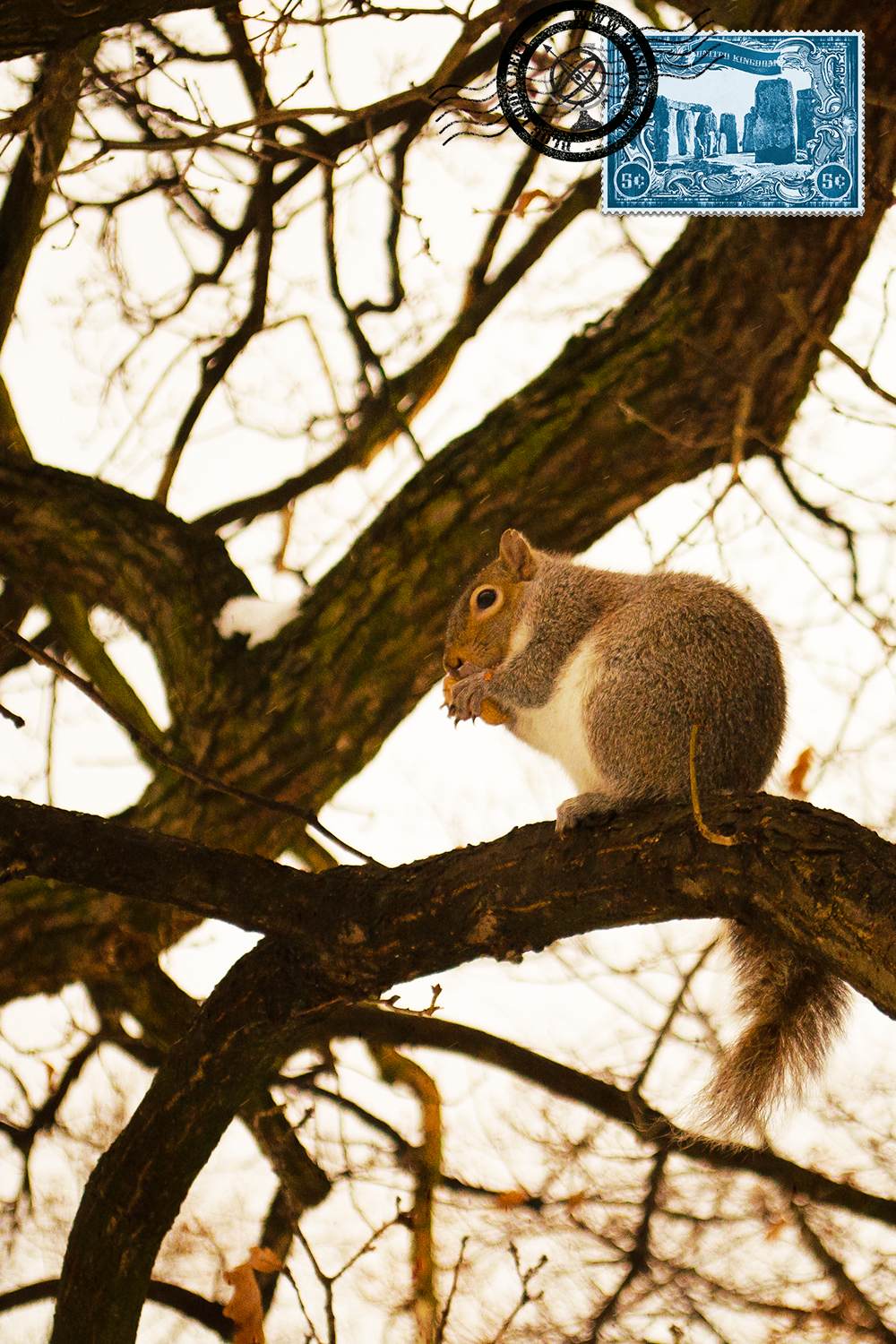Squirrel at Hyde Park