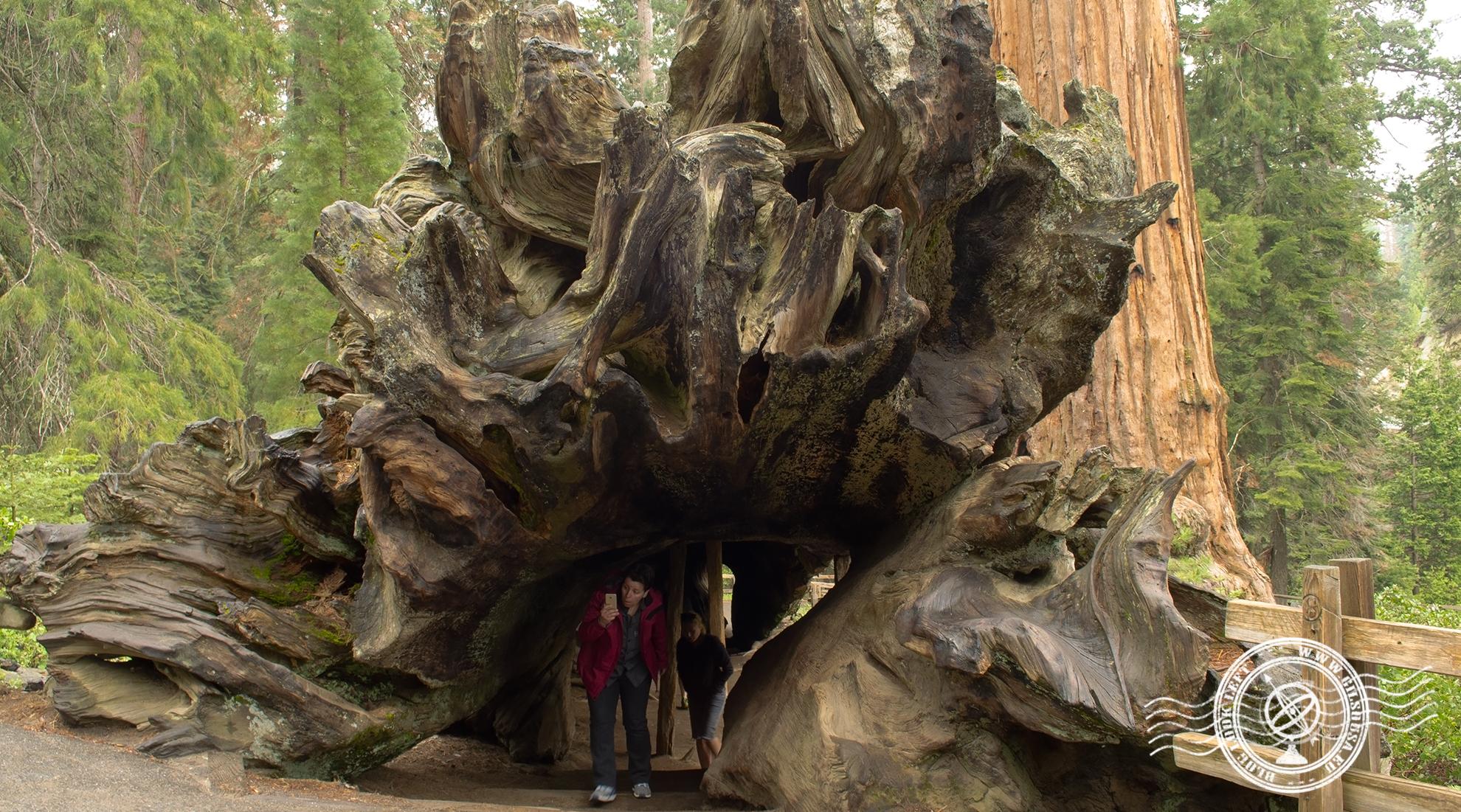 Atravessar uma Sequoia Gigante