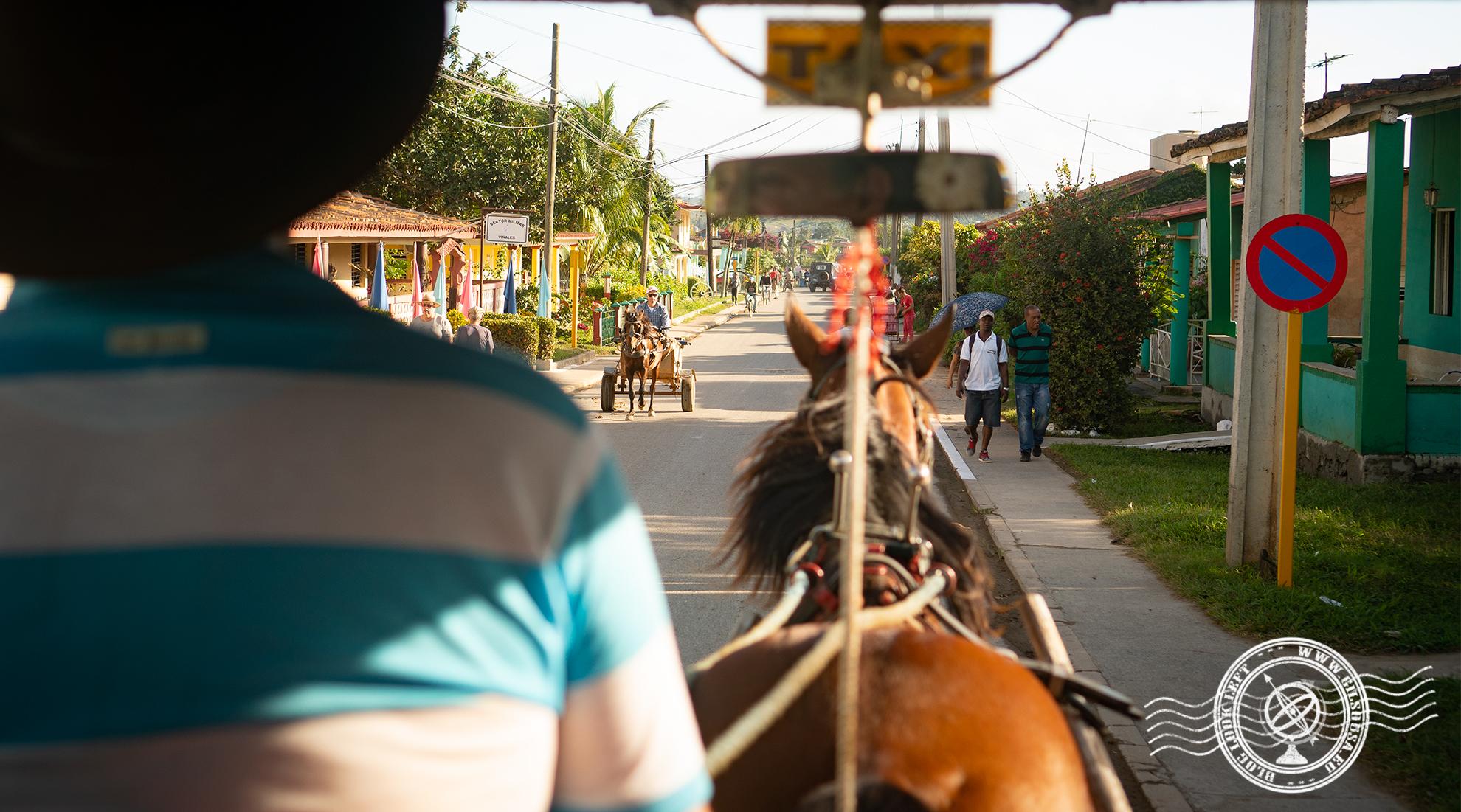 Horse Taxi in Viñales