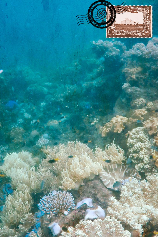 Corais no primeiro mergulho