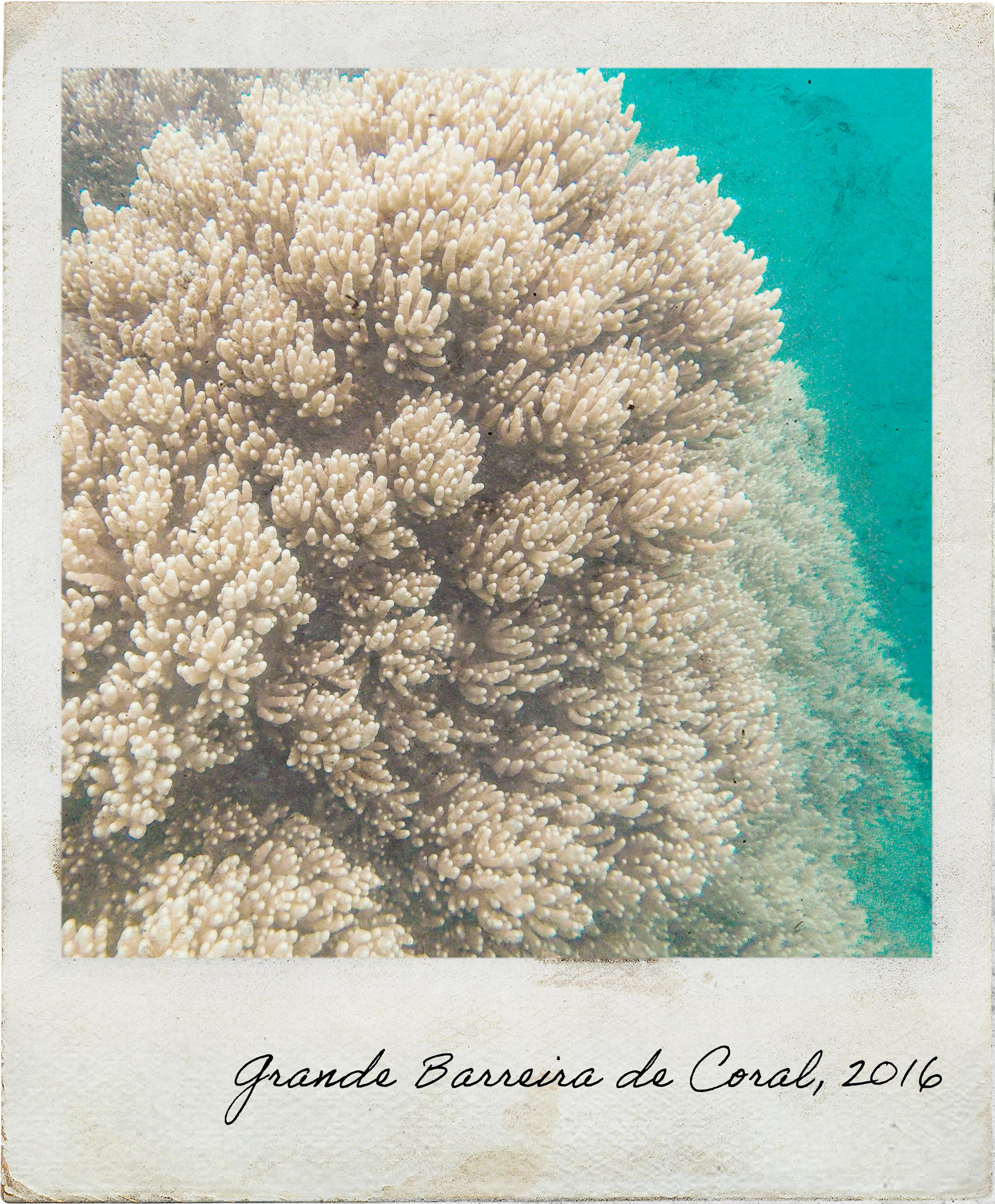 Estrutura de corais no segundo mergulho
