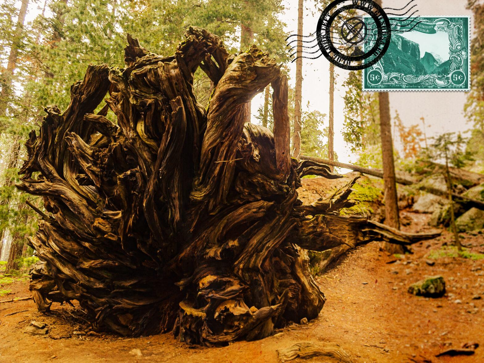Conhecer os Parques Nacionais de Sequoia e Kings Canyon