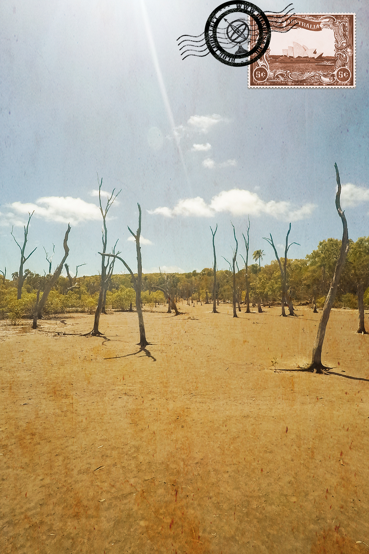 Floresta morta em Pancake Creek