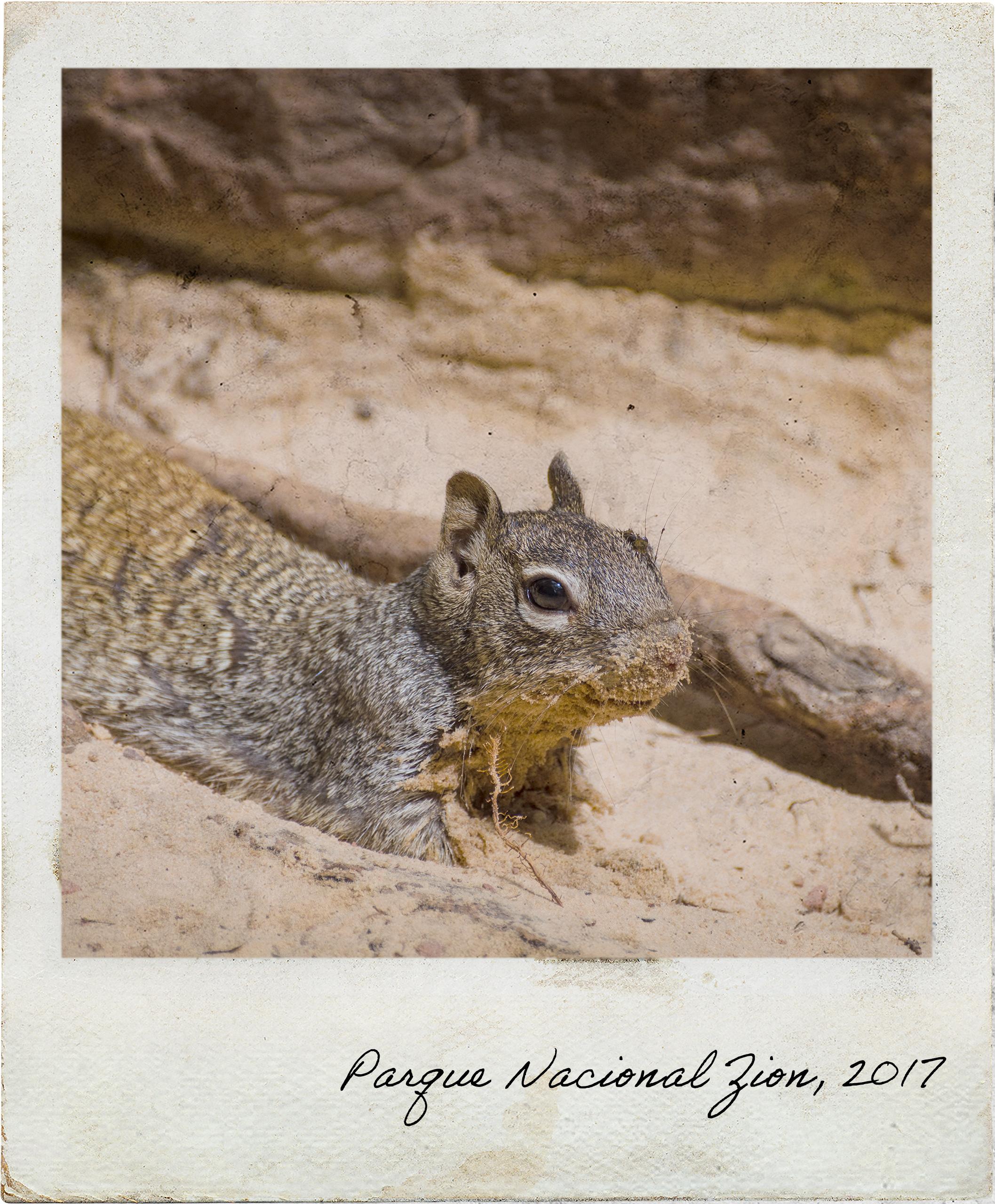Esquilo que encontrei na Piscina Intermédia