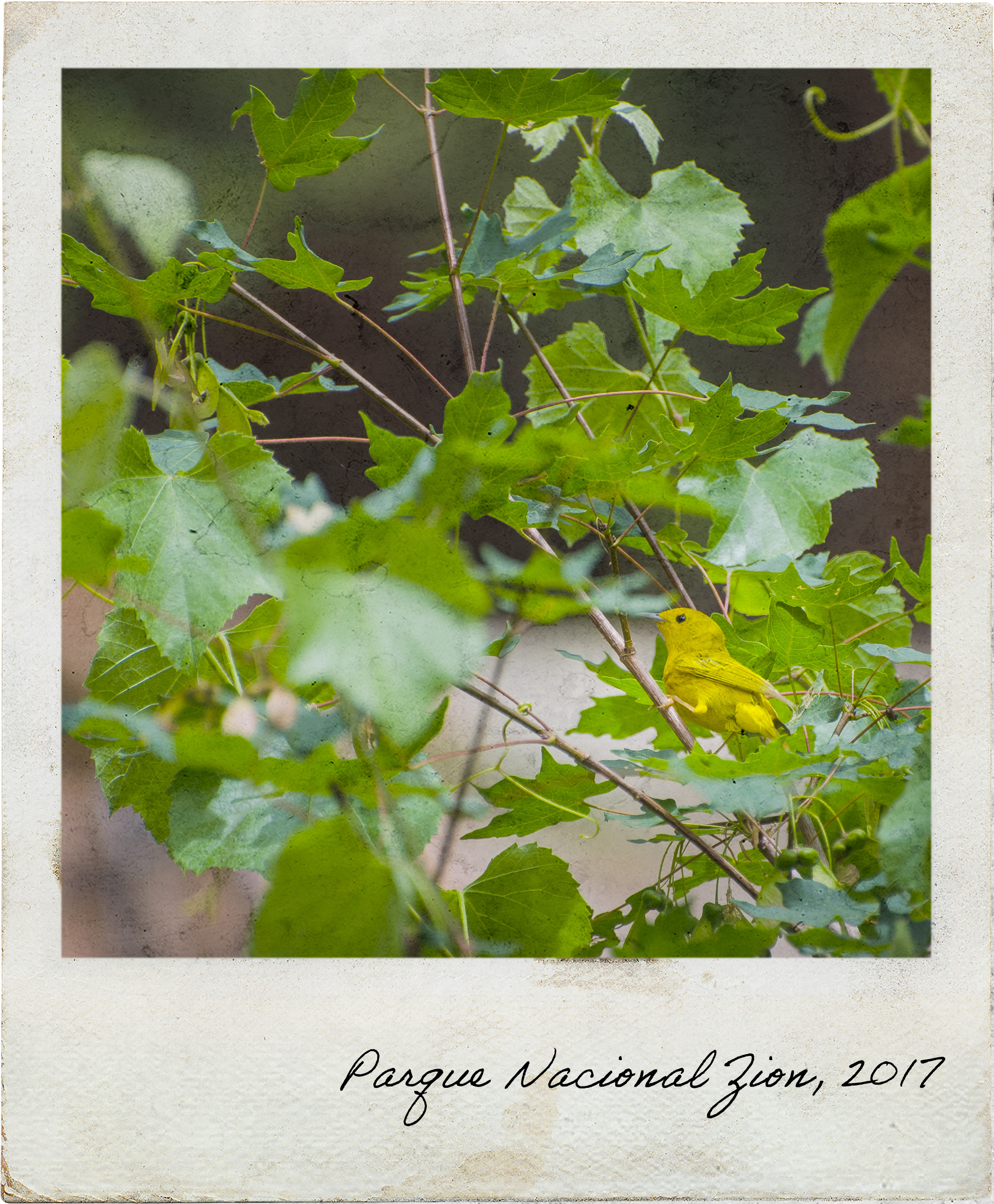 Observação de pássaros dentro do Parque Nacional Zion